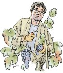 Wine Writer put to work at the Seghesio Winery, California.